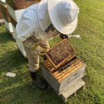 Looking Into The Cultural Beehives